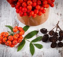 Jarzębina: wino z owoców jarzębiny